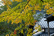 Brightly coloured Acer leaves near a pavilion in the Saiho-ji Garden (Temple of Moss) Kyoto,  Japan