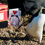 Penguin Valentine Cards at London Zoo