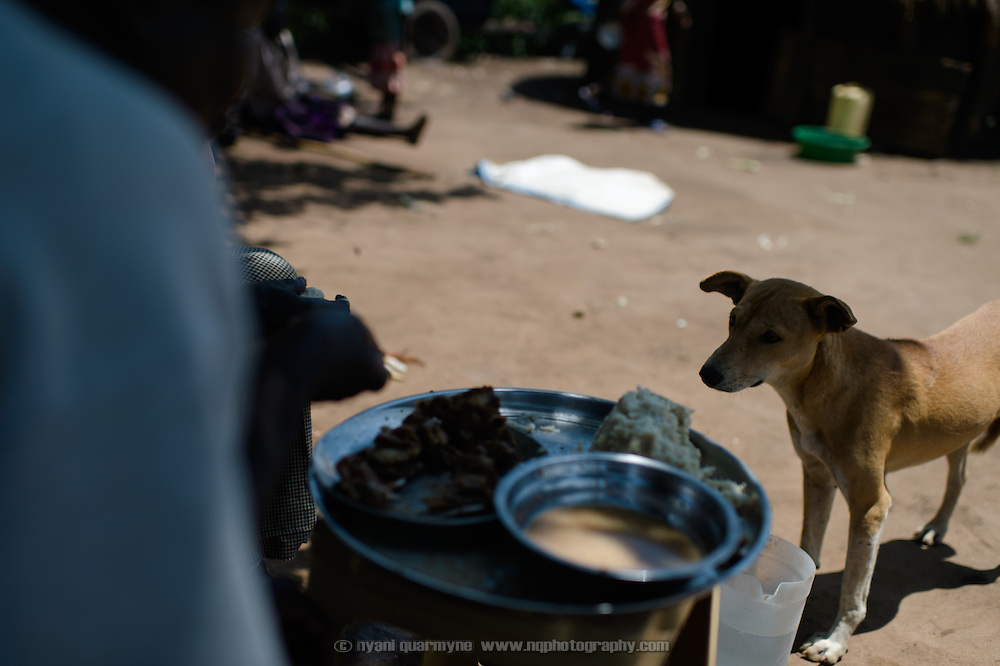 A dog waits hopefully for scraps in Imurok Payam in Eastern Equatoria, South Sudan on 9 August 2014. Due to a combination of drought in some parts of the country, the ravages of pests in others, and instability caused by war, many South Sudanese are facing acute food shortages and possibly famine.