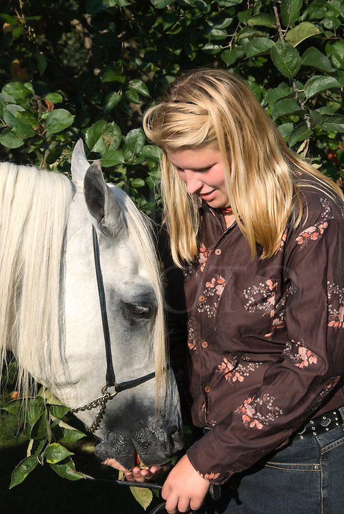 Picture of a horsewoman hand feeding an apple to her beautiful white Arabian stallion.