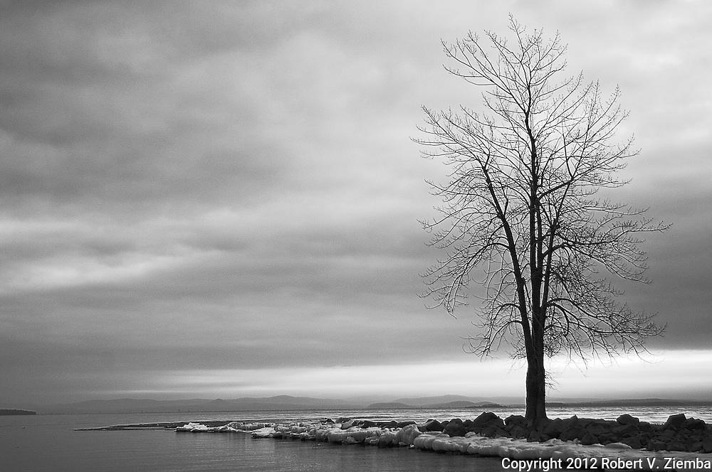 A black and white image of a lone tree on Ausable Point on Lake Champlain