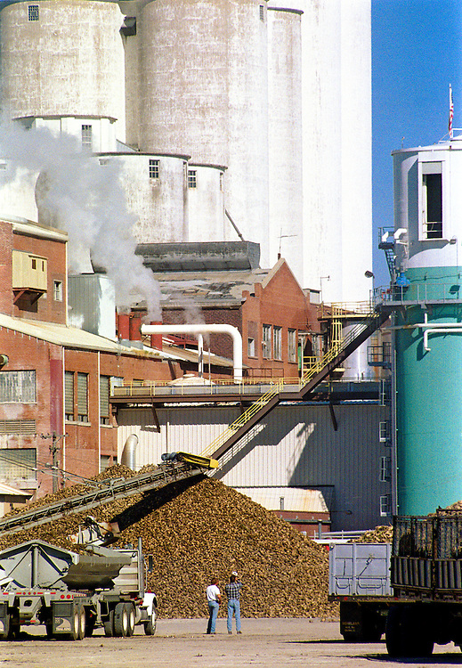 Farmers wait to unload their sugar beets during harvest in Fort Morgan Colorado.