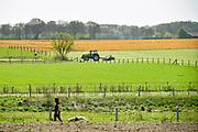 Nederland, 18-4-2018Een perceel is behandeld met Roundup, een gewasverdelger van fabrikant Monsanto en kleurt geel, oranje . Het product verstikt het groen boven de grond en ook de wortel legt het loodje . Door het grootschalig gebruik van onder andere dit middel wordt het drinkwater, grondwater, verontreinigd en verdwijnen de weidevogels en bijen