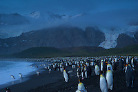 Gold Harbor<br />