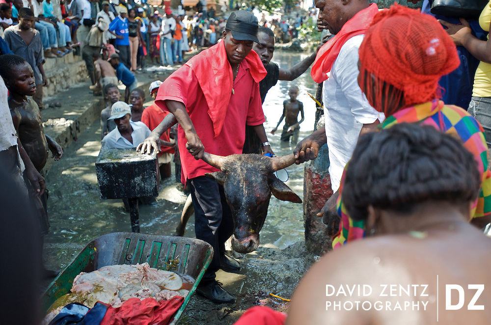 Following its sacrifice, pilgrims prepare to toss a bull's head into the sacred St. Jacques' hole, a mud pit on the edge of Plaine du Nord, Haiti, the site of an annual 2-day voodou festival held there on July 24, 2008. Animal sacrifice to appease the lwas, or spirits, are common in Haitian voodou. At Plaine du Nord pilgrims worship the lwa Ogou, who presides over matters of war, politics, iron and fire, and also Saint James, the Catholic warrior saint. Catholicism and voodou are forever intertwined in Haiti.
