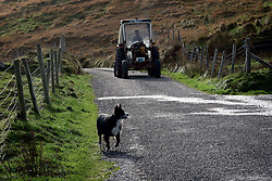 IRELAND KERRY DINGLE 3NOV05 - A tractor and a shepherd dog near Brandon Point on the Dingle Peninsula, Irelands most westerly county...jre/Photo by Jiri Rezac..© Jiri Rezac 2005..Contact: +44 (0) 7050 110 417.Mobile: +44 (0) 7801 337 683.Office: +44 (0) 20 8968 9635..Email: jiri@jirirezac.com.Web: www.jirirezac.com..© All images Jiri Rezac 2005 - All rights reserved.