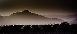 Desert landscape in evening light, southern Morocco<br /> <br /> (c) Andrew Wilson | Edinburgh Elite media