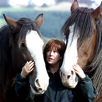 Lorna Simpson, Equine Manager of The Fairways Heavy Horse Sanctuary, near Perth, pictured with Clydesadale's Tom and Sally who have been at the centre for over 14 years. The sanctuary is appealing for help to keep the centre open and avoid having to put down the horses.<br />