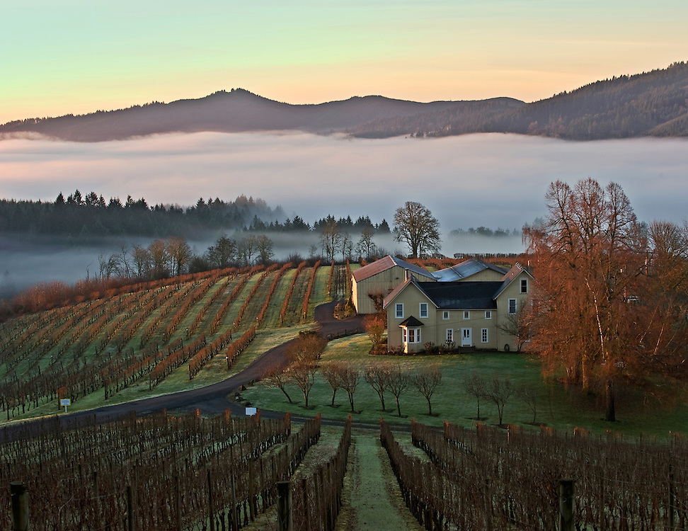 Winter Sunrise at David Hill Winery