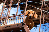 Dog on roof in Holguin, Cuba.