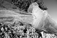 Reportage sul comune di Alessano per il progetto propugliaphoto..Rete per la raccolta delle olive..Macurano è un villaggio rupestre considerato un luogo di scambio e commercio, simbolo della cultura dell'olio per la presenza ad oggi di alcune tracce nelle grotte e di frantoi funzionanti nella zona. L'insediamento è caratterizzato da una serie di grotte sia naturali che scavate nel calcare, cisterne per la raccolta dell'acqua, sistemi di canalizzazione che scendono da Montesardo, viottoli, scalette e vie più larghe con antiche tracce di carri..Si ritiene che in questo sito, un vero e proprio centro abitato ben organizzato distante circa quattro km dalla costa, i monaci basiliani scappati dall'oriente in seguito alla lotta iconoclasta, trovarono rifugio e si dedicarono all'agricoltura..L'area del villaggio rupestre fu sicuramente sfruttata in epoche successive, lo prova l'esistenza di ben tre masserie di cui una fortificata e i resti di una serie di costruzioni che fanno parte dei numerosi esempi di architettura rurale presenti in questo territorio. .Il complesso masserizio, denominato Macurano, edificato probabilmente nel Cinquecento include la Masseria di Santa Lucia e la cappella di Santo Stefano. La Masseria è dominata dal nucleo originario, ovvero dalla torre cinquecentesca coronata da beccatelli a sostegno del parapetto aggettante del terrazzo sommitale.