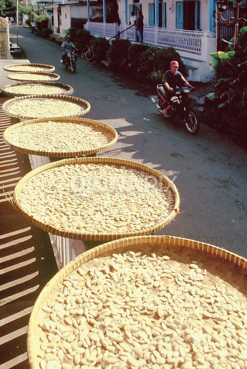Kenari nuts drying along one of Banda's quaint colonial streets.