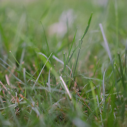 Grass Detail Outside Nana's House, Castine, Maine, US