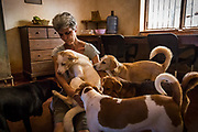 EVA RUPPEL sits with a small pack of rescued dogs in her kitchen near Kandy, Sri Lanka, on Wednesday, February 21, 2018. Ruppel does not cage the approximate 170 rescued dogs living with her, allowing them freedom to roam and interact in small packs in multiple pens throughout her property, as well as inside her home. Ruppel created Tikiri Trust, with the financial assistance of her father, to rescue and rehome Sri Lanka's street dogs.<br /> <br /> <br /> It is impossible to visit Sri Lanka without seeing street dogs in nearly every public space, near hotels, guest houses and restaurants, schools, offices, markets, hospitals, police stations, bus terminals, railway stations, temples, etc. These dogs do not have their own homes, but they are usually highly tolerated and are typically fed collectively by people in a particular area.<br /> <br /> According to the NGO, Kandy Association for Community Protection through Animal Welfare (KACPAW), 100 unsterilized dogs will give rise to 3,000 dogs in one year. The Sri Lankan government, as well as several NGOs, work to spay/neuter animals, but there is need to educate the public and maintain funds to stay on top of their efforts.<br /> <br /> Eva Ruppel left Germany for a three-month visit to Sri Lanka, which included time in a Buddhist meditation retreat, and she remains in this island nation 37 years later.<br /> <br /> While married, Ruppel&rsquo;s husband asked that the couple keep only three dogs in their home at any one time, and she respected his wishes. This 60-something year old lost her husband to a ruptured brain blood vessel in 1995 when he was 51 years old, after nine years of marriage. After his death, she began rescuing more and more animals and she now lives with 170 dogs, plus a dozen or so cats.<br /> <br /> With the support of her father, she started Tikiri Trust. Her father passed away in 2011, and he left her an inheritance, which she continues to use to support her cause. <br /> <br /> Ruppel, who is fluent in German, English and Sinhala, said that she has found homes for &ldquo;hundred