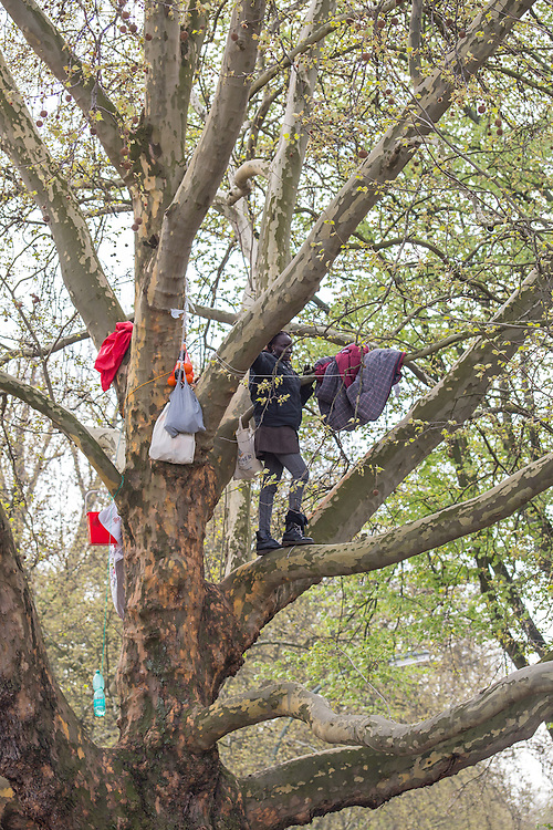 Germany - Deutschland - REFUGEES; ASYLUM politics; Flüchtlinge; NAPULI LANGA from Sudan, protesting & living on a tree (Platane) on Oranienplatz, Berlin-Kreuzberg; 12.04.2014; © Christian Jungeblodt
