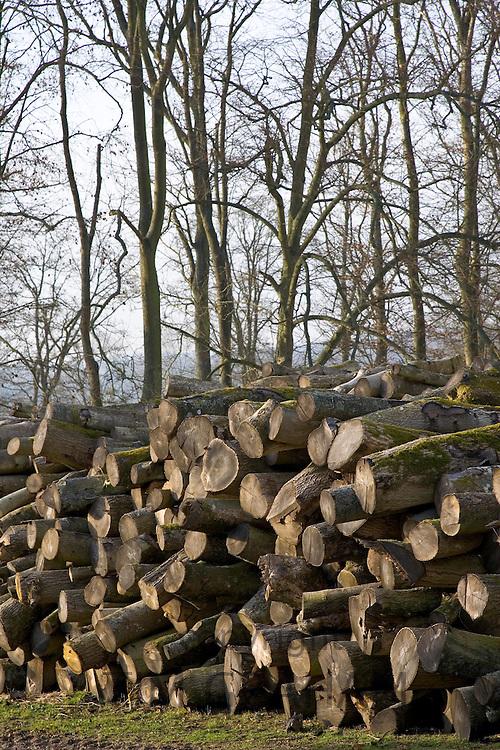 Pile of beech tree logs being seasoned , Gloucestershire, United Kingdom.
