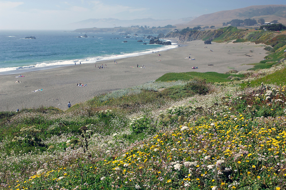 Flowers, Beach near Jenner, California, United States of America