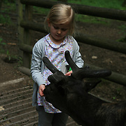 Girl feeding a Moose in a Wild Animal Park in Germany