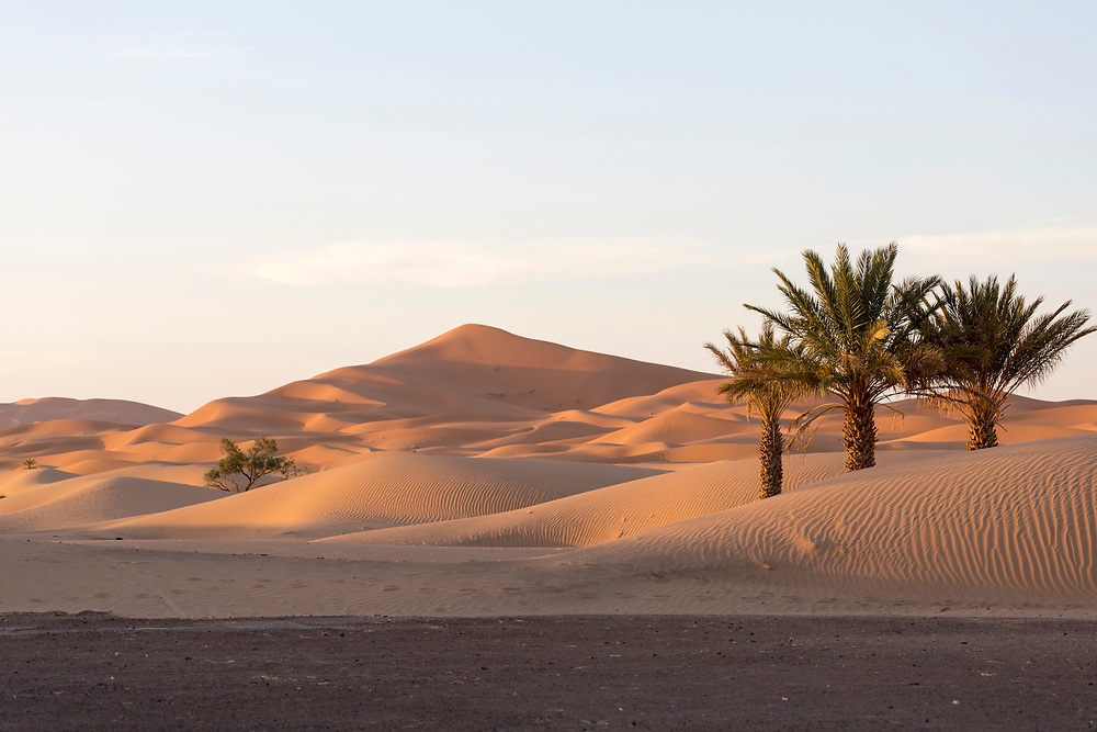 """Sahara Desert landscape, Merzouga, Erg Chebbi region of the Moroccan Sahara, Southern Morocco, 2015-06-10.<br /><br />The Moroccan Sahara desert is divided into two main regions; Erg (""""dune"""") Chebbi and Erg Chigaga. <br /><br />The Erg Chebbi region is more easily accessed from both Fez and Marrakesh, with well built asphalt roads taking you right upto the face of the dunes. It sees increased tourism as a result. A short walk from the historic trans-Saharan caravan-route town of Merzouga, and you'll find yourself immersed by the Chebbi dunes. The drive alongside towering walls of sand dunes as you approach in itself is a spectacle. The Chebbi region has the tallest dunes in Morocco, which is another reason as to why its the most popular choice, and its views of mountains in Algeria in the distance is not to be missed. <br /><br />Whether bound for the """"chebbi"""" or the """"chigaga"""" dunes, your journey from the Imperial cities of Fez or Marrakech will take you through significant changes in landscape, from barren rocky plateaus to lush Oasis valleys, before reaching the desert itself."""
