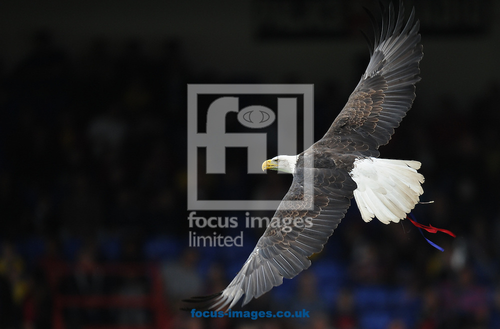 The Eagle of Crystal Palace flies before the Barclays Premier League match at Selhurst Park, London<br /> Picture by Alan Stanford/Focus Images Ltd +44 7915 056117<br /> 18/10/2014