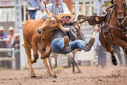 Steer Wrestler Jarret New of Wimberley, Texas grabs the horns of a steer at the Cheyenne Frontier Days rodeo at Frontier Park Arena July 24, 2015 in Cheyenne, Wyoming. Frontier Days celebrates the cowboy traditions of the west with a rodeo, parade and fair.