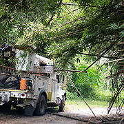 JULY 19, 2018----UTUADO, PUERTO RICO---<br /> A Puerto Rico Electric Power Authority truck maneuvers around fallen bamboo trees on their way to restoring power to a single family home.<br /> (Photo by Angel Valentin/Freelance)