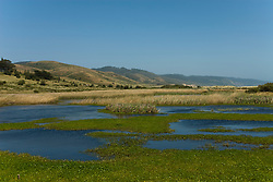 California: Wetlands near Limantour Beach at Point Reyes National Seashore near San Francisco. Photo copyright Lee Foster. Photo # casanf81254