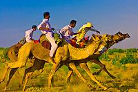 Camel race, Desert Festival, Sam Sand Dunes, near Jaisalmer, Rajasthan, India