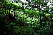 Japan, Yakushima - red trees and green nature
