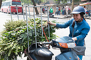 A woman selling greenery from her motorcycle in Hanoi, Vietnam, Southeast Asia