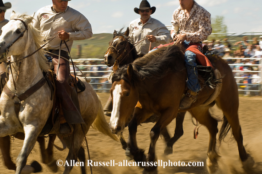 Pickup men Jay Shaw, Kyle Shaw and Lynn Ashley pick up bareback bronc, Miles City Bucking Horse Sale, Montana