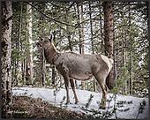 2015 Yellowstone Park