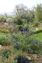 View over the garden with Salvia 'Indigo Spires' in the foreground