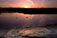 Contrails in Sky at Sunset While Creek Empties into Upper Newport Bay with Ducks in Water, Newport Beach, California