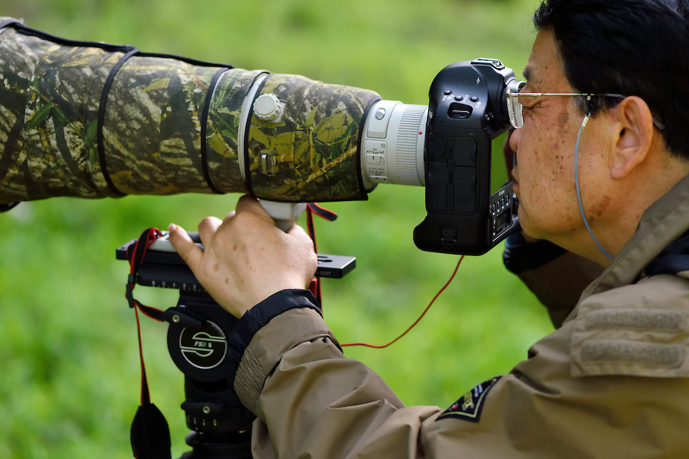 Wildlife photographer Chen Jianwei, President of the Wild Wonders of China foundation, Tangjiahe National Nature Reserve, NNR, Qingchuan County, Sichuan province, China