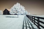 Infrared photographs of Lexington, Kentucky