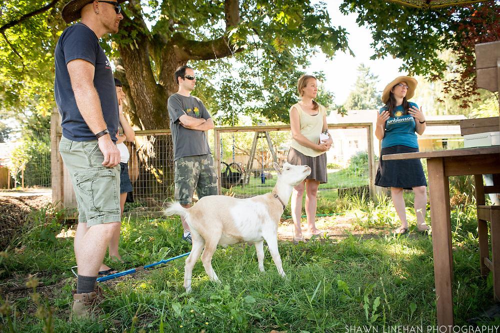 Nigerian Dwarf Goat at Sunblossom Farm in Portland, Oregon