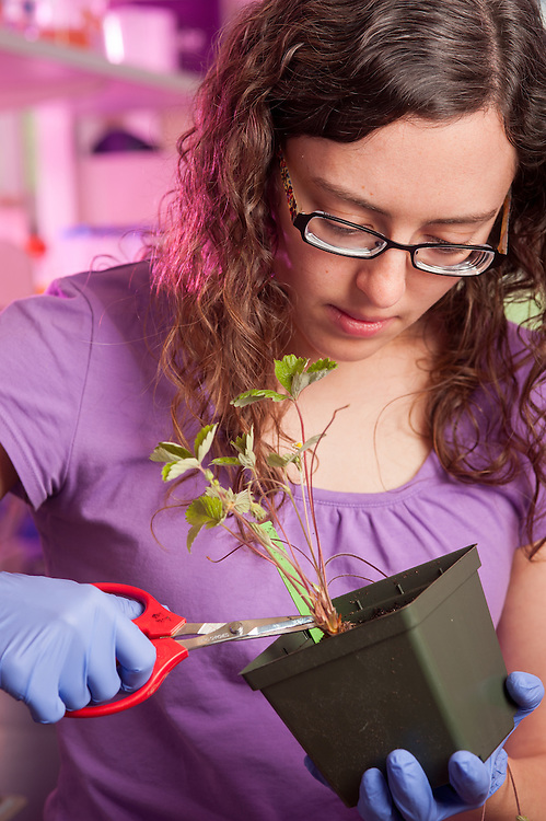 Young woman cutting a plant in a plant science lab in College Park, Maryland