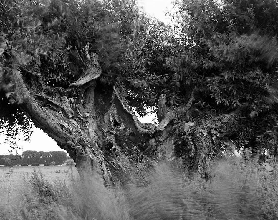 1931<br /> <br /> ST. SYMPHEREIN, a willow burnt after a lightning stroke.<br /> <br /> &ldquo;During the last storm in the area a cow worth 3 thousand franks was killed by a strike of lightning.&rdquo; <br /> <br /> ST. SYMPHERIEN, wierzba spalona po uderzeniu pioruna<br /> <br /> &quot;Podczas ostatniej burzy jaka panowała w okolicach tutejszych, została wskutek uderzenia pioruna zabita krowa wartości 3000 frank&oacute;w.&quot;