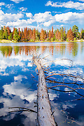 Fallen tree, Sprague Lake, Rocky Mountain National Park, Colorado