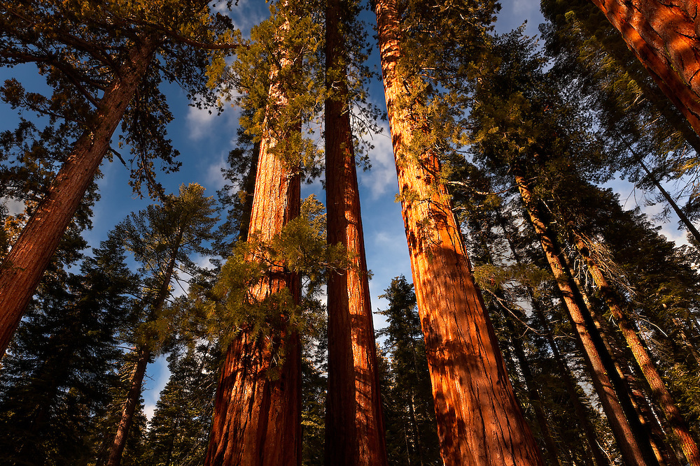 Mariposa Grove Giant Sequoias 4-26 PM