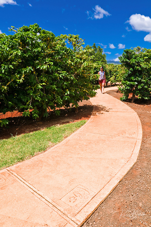 Walkway and coffee trees at the Kauai Coffee Company. Island of Kauai, Hawaii