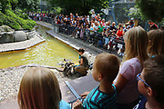 Mannheim. 05.06.17 | ID 011 |<br /> Luisenpark. Fütterung der Pinguine<br /> <br /> Bild: Markus Proßwitz 05JUN17 / masterpress