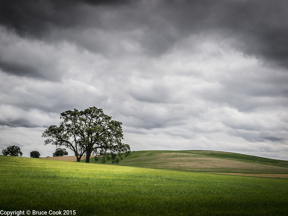 Spring field under stormy skies