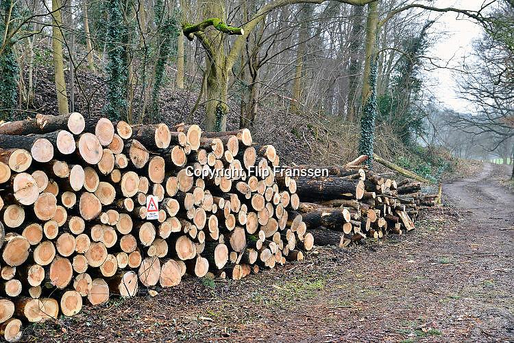 Nederland, Ubbergen, 31-1-2017Een stapel gekapte boomstammen liggen klaar voor transport. Staatsbosbeheer is bezig met het uitdunnen van dit bos. Vanwege de vondst van een oehoe nest is de kap voorlopig stilgelegd.Foto: Flip Franssen