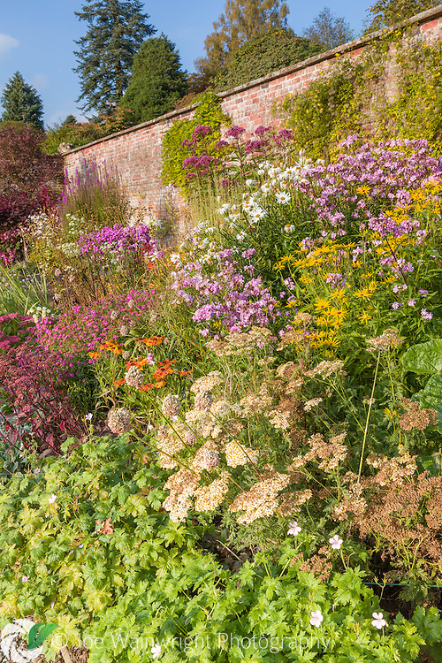 Colouful herbaceous borders in the Walled Garden at Holehird Gardens, Cumbria, photographed in October. Planting includes Heleniums, Sedum and Phlox.