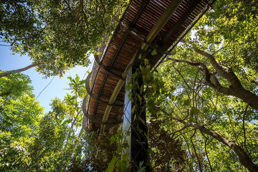 View from below of The Centenary Tree Canopy Walkway at the Kirstenbosch Botanical Gardens in Cape Town, South Africa