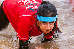 Wembley, London November 22nd 2014. Thousands of competitors in teams compete in the Men's Health Survival of the Fittest event, raising money for various charities. Event organisers Rat Race created the challenging course, with various obstacles from mud pools to scaffolding climbing frames, with both serious and not-so-serious athletes competing for glory. PICTURED: A determined woman crawls through the reezing, muddy water of one of the obstacles on the course.