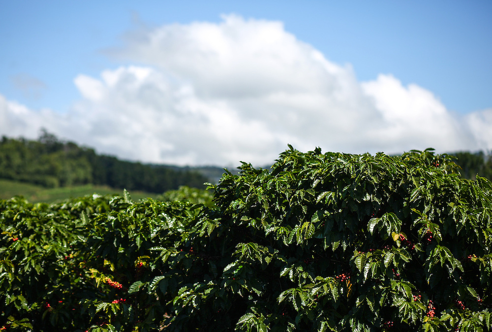 The Hacienda Alsacia farm is shown during the 2016 Starbucks Origin Experience for Partners. Photographed in January 2016. (Joshua Trujillo, Starbucks)