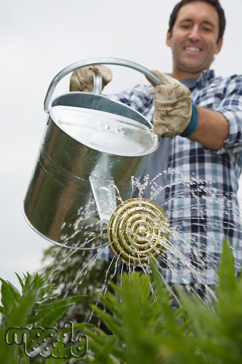 Man watering crops in field